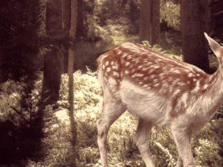 Jagen oder hegen? 3 handfeste Anregungen für Ihr Marketing Mindset